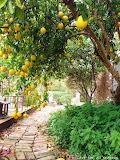Pick your own lemons