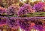 Printemps-arbres en fleurs-reflets