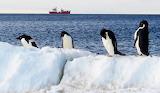 Preening Penguins