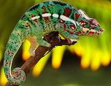 ~Chameleon~