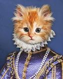 Prince Kitty