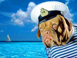 Salty old sea dog
