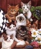 Allemaal+kittens+1