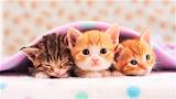 #Under Cover Kitties