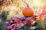 Autumn, pumpkin, lawn, grass, leaves, basket, tablecloth