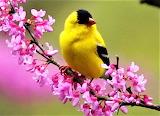 #Bird on Flowering Branch