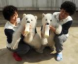 Twins feeding twin polar bears in China