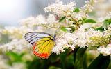 Summer-flowers-butterfly-nature