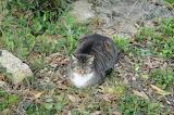 Cat without paws /chat sans pattes :D