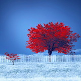 ~Lonely Red Trees~