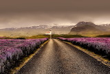 Road to church lined by flowers Iceland