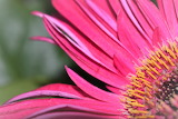 De mi jardín 833