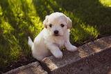 Hermoso mascota