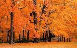 Blazing Fall Leaves