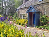 Cottage with yellow flowers