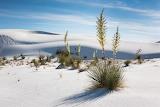 Désert de sable blanc - New Mexique