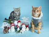 cats with cute snowman