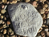 I Love My Dog Arvada West Veterinary Hospital