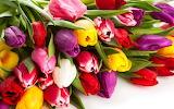 Best tulpe#1200 26