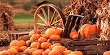 #Pumpkin Loot