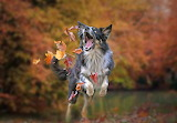 Catching leaves