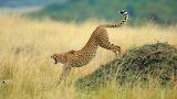 CheetahBotsUp