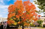 Fall Foliage (9)
