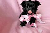 Ribbon cutie