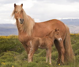 Mom and her little foal