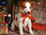 Terrier with bow