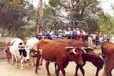 Bullock team ride OST 2003 Geoff Potter photograph CCLS