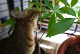 Can Has Plant