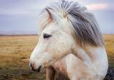 Beautiful Horses @ Pixabay...