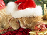 *Sleepy Santa Paws...