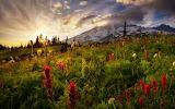 3 derevia-peizazh-tsvety-priroda-tuman-ozero-rastitelnost-gora