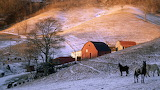 Vintage photo of farm