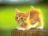 Kitten On Stump