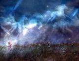 Starlight Horses
