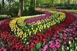 Keukenhof-garden, Amsterdam