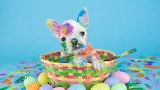 Easter French Bulldog