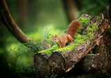 Squirrel, log, tree, branches, moss