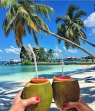 Cocktails in Paradise