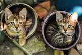 Cats-in-flowerpot