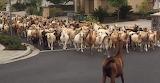 Goat Army