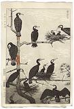 """Birds tumblr dogstardreams """"Nesting Cormorants"""" """"Shiro Kasamatsu"""