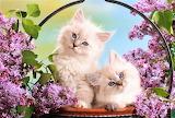 #Pretty in Lilac