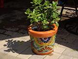 Mexican flowerpot