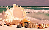 #Beach Shells