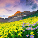 ~Valley of Flowers~