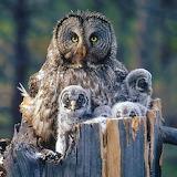 Mama Owl & Owlets...